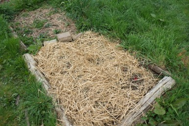 Plantation de liliacées